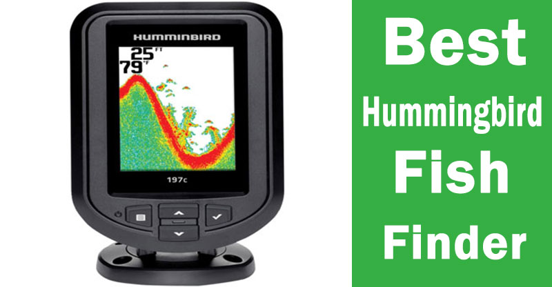 Best Hummingbird finder